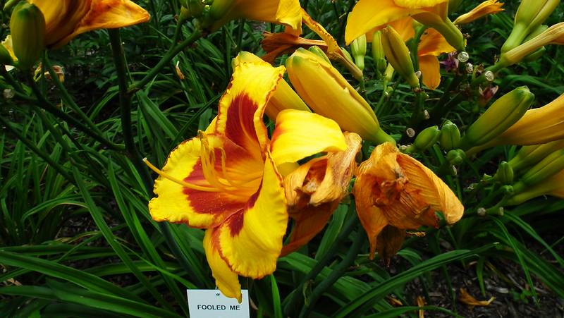 Kwiaty w ogrodzie botanicznym (zieloneforum.pl)