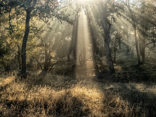california road morning autumn mist fall fog forest sunrise landscape oak ngc crepuscularrays nationalgeographic hornitos godbeams godrays godslight catheysvalley hornitosroad
