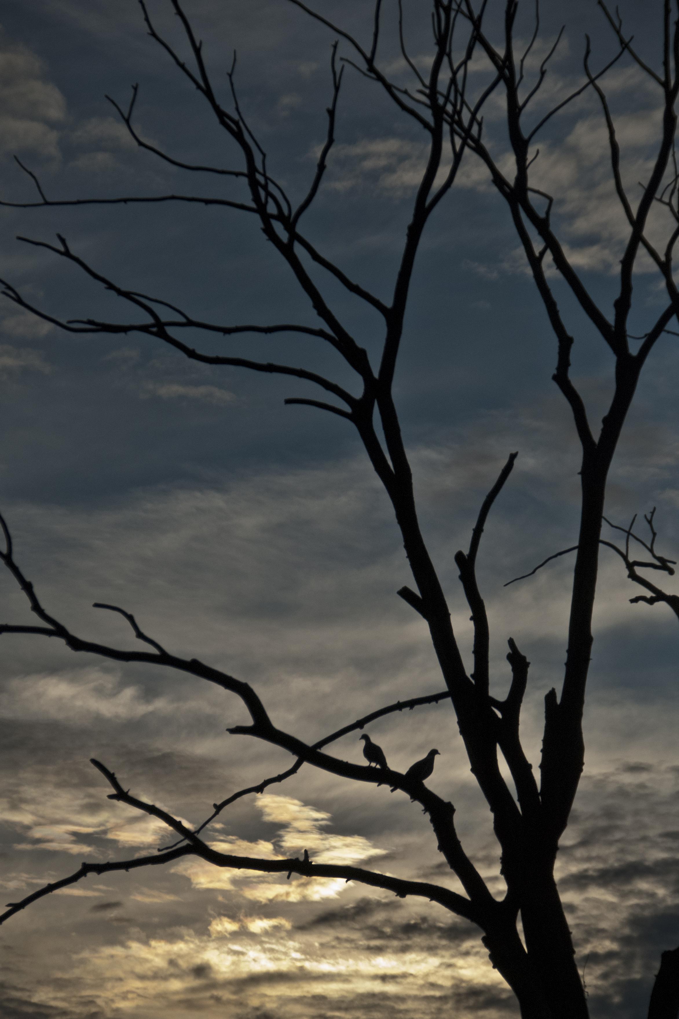 Kvällspromenad duvor