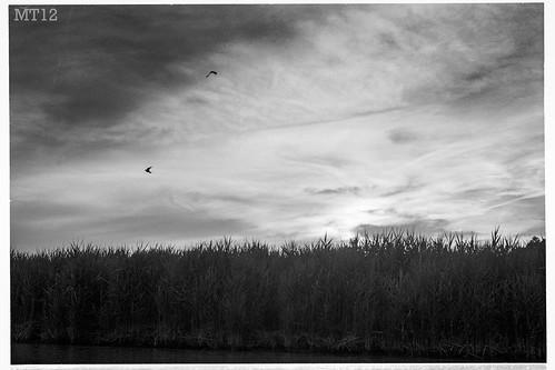 sunset summer plants ontario canada film beach water birds 35mm afternoon matthew things shore 2012 grandbend trevithick portfranks mamiyadsx1000 lambtonshores matthewtrevithick mtphotography