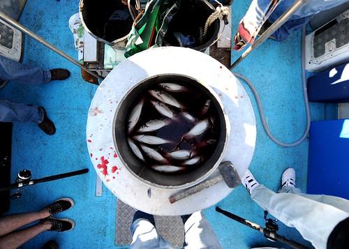 Fish in a barrel | by Pigdowndog
