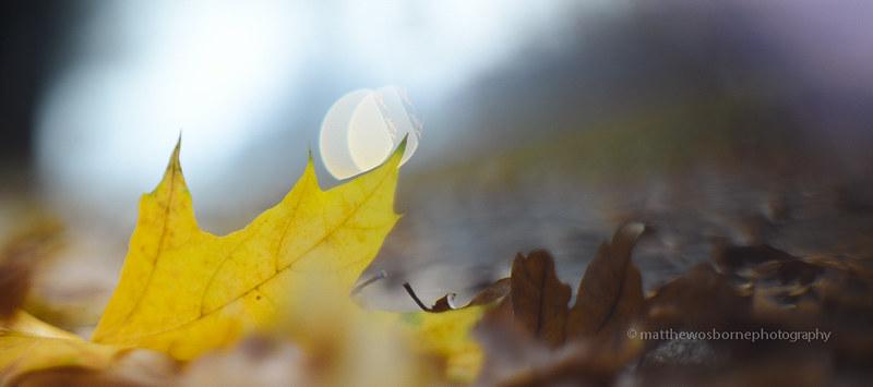 Autumn Leaves, Hungary