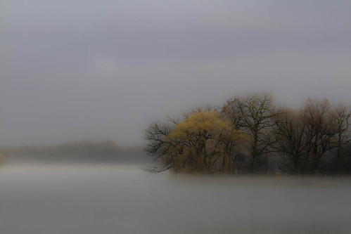 plants nature water weather fog wisconsin day unitedstates central lakes parks places beaverdam biological treesleaves beaverdamarea foghazesmoke