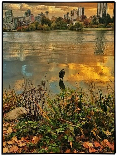 Vancouver BC ~ Canada ~ A Lonely Sea Gull ~ (West Vancouver)