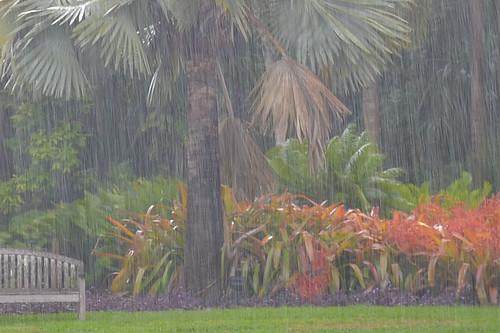 Miami Rain