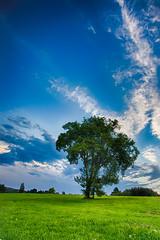 Emmarentia Tree 1