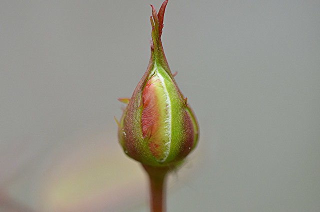 Un fiore si affaccia alla vita
