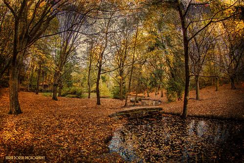 autumn trees light texture leaves reflections stream fisheye topaz longfellowcreek clivesax camplongpark