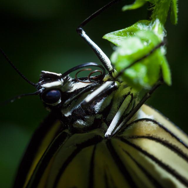 Butterfly Palace 8140