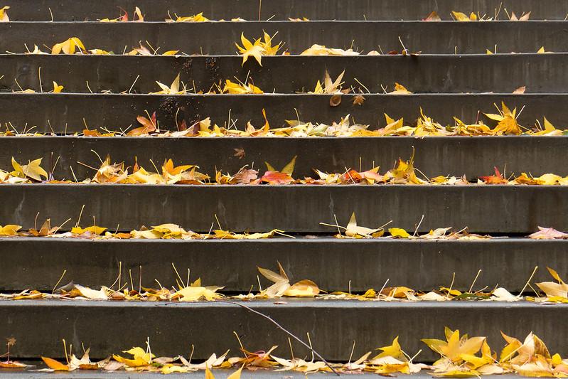 Autumn Steps 2 (color)