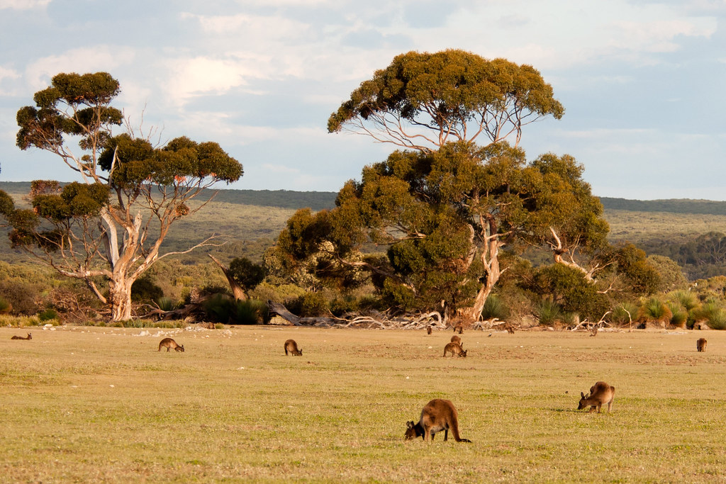 Image result for kangaroo island""