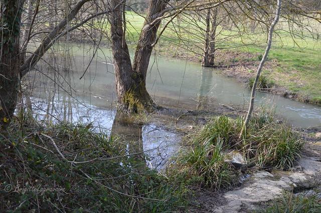 Plus tout à fait ruisseau, pas encore lac.