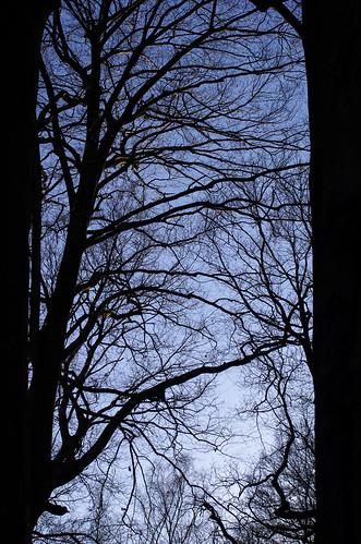 Fenster der Natur   by Silaris Inc.
