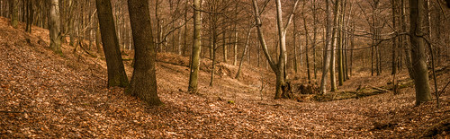 spring autumn 2in1 canon teamcanon canon80d fieldtest 35350mm nature naturephotography europe hungary gogreen outdoor photography panorama parasznya borsodabaújzemplén hu exploring fantasticearth explore forest woods woodscape