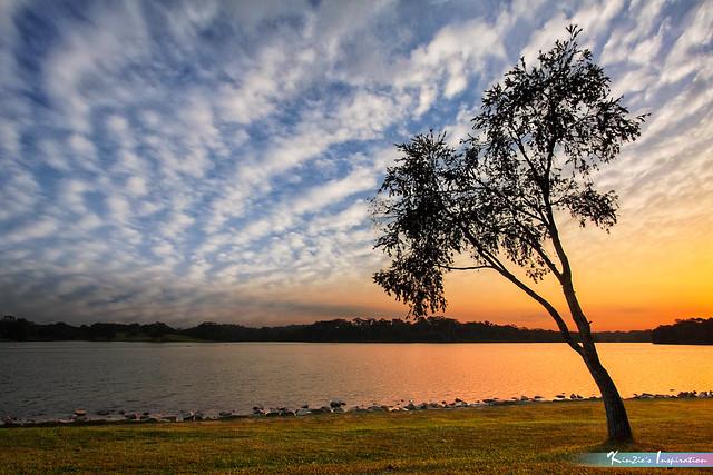 獨樹 l Lone Tree, Lower Peirce Reservoir *Corners of Singapore*