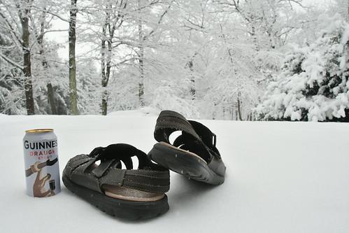 spring snow stillwinter blacksburg winter snowday guinness sandals flipflops woods forest trees pines white nikon digital nikond500 d500 18200mm 18200 blacksburgvirginia blacksburgva virginia va newrivervalley nrv tree