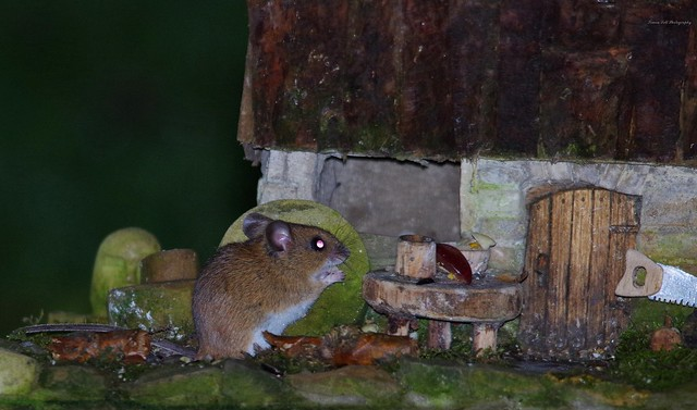 wood mouse and little house (1)