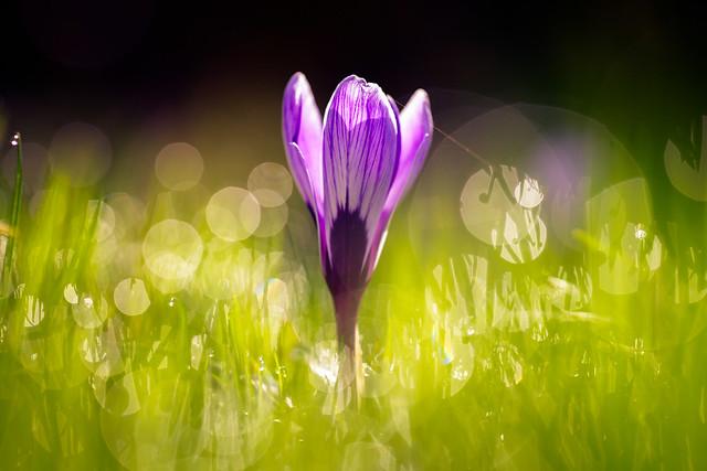 Sparkling Springtime