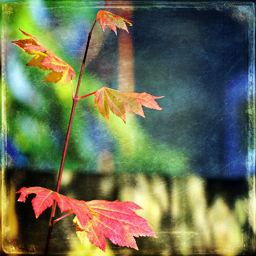 autumn sunlight color nature square shadows bokeh textures 7d ie shining hss vinemaple coth vividimagination artdigital trolled memoriesbook awardtree magicunicornverybest 1crzqbn sliderssunday netartii blisstome 45522012