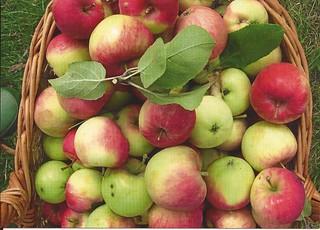 Apple Helsinki