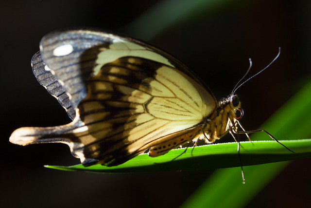 Butterfly Palace 7983