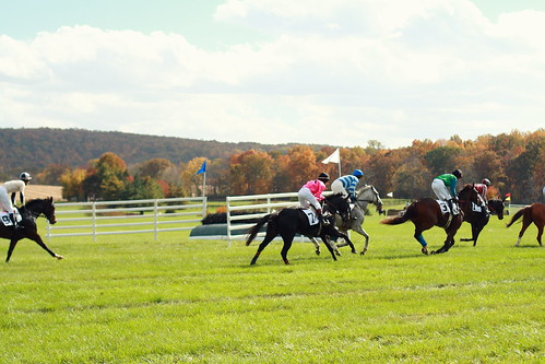 Fall Gold Cup 2012 | by districtofchic