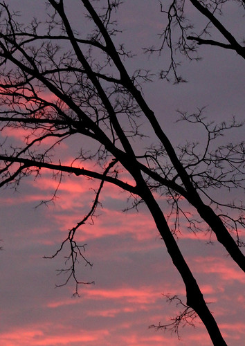 pink sunset silhouette clouds