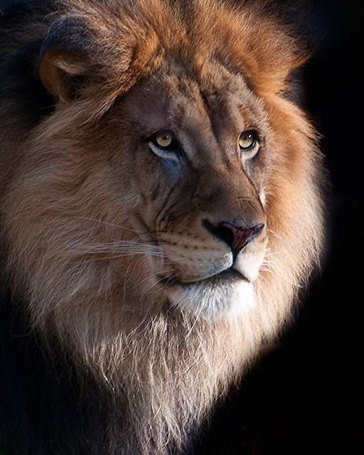 King of the Beasts - Luke