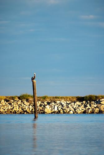 morning lake bird pelicans birds sunrise scott photography louisiana state neworleans pelican nola pontchartrain mohrman pwpartlycloudy