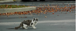 A stray cat on a parking lot. | by kennethkonica