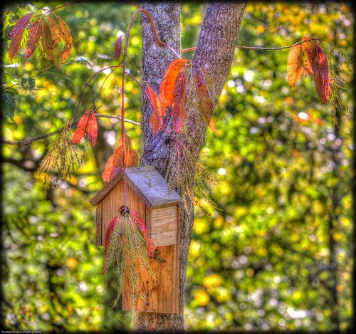red fall birdhouse treehouse hdr photomatix lr2 epworthga