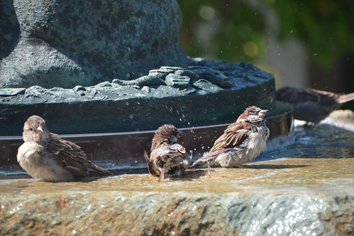 Bird bath time