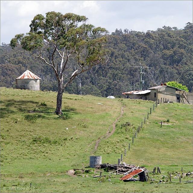 Murrah farm