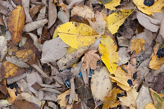 Autumn Leaves (at 42)