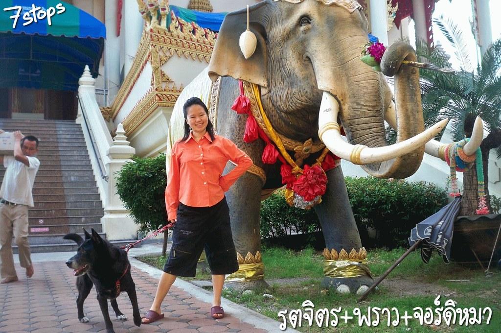 ช้างไทย ช้างชูไทย ช้างศึก