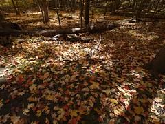 日, 2012-10-21 12:08 - 紅葉