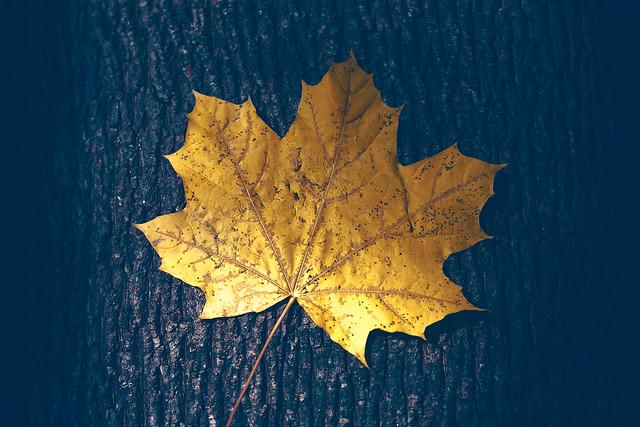 Hidden Autumn