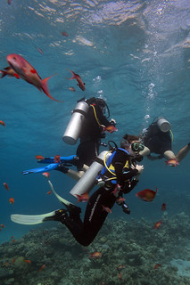 The Canyon dive site Dahab Egypt (5 meter stop) | by Mal B