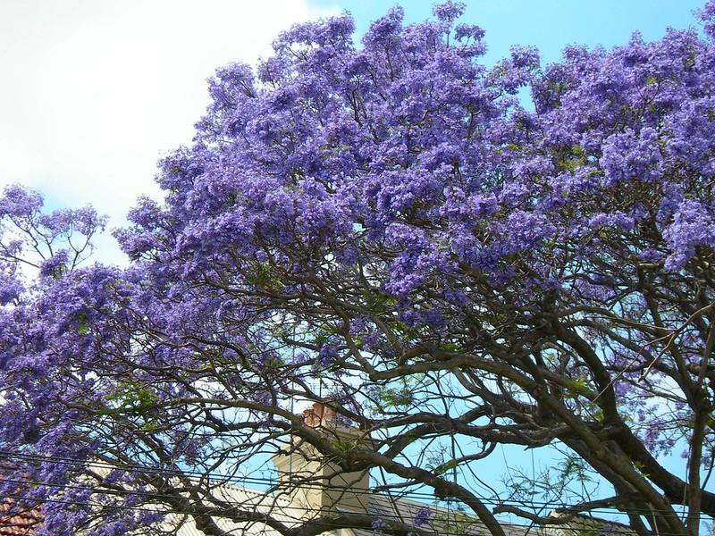 VIAGGI: AUSTRALIA 2012 - 181