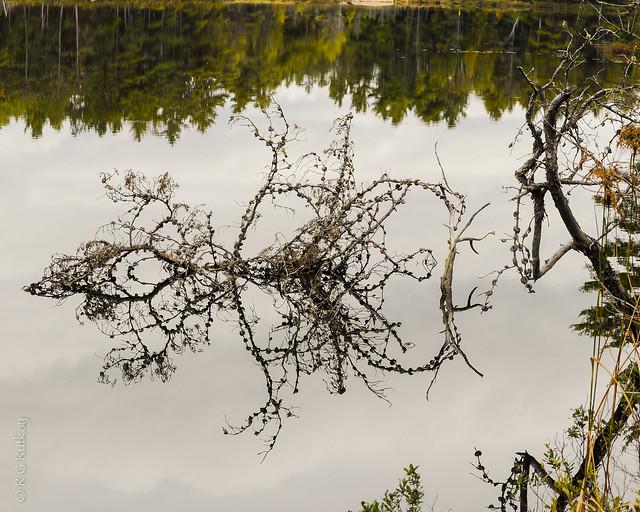 Reflections Grundy Prov Park-2038