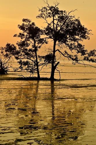 sunset reflection tree johor muar westmalaysia muarriver