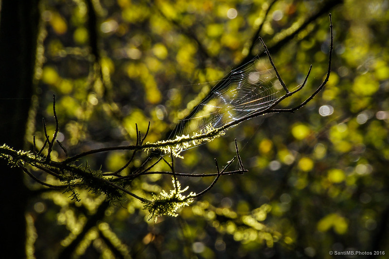 La hamaca de la araña