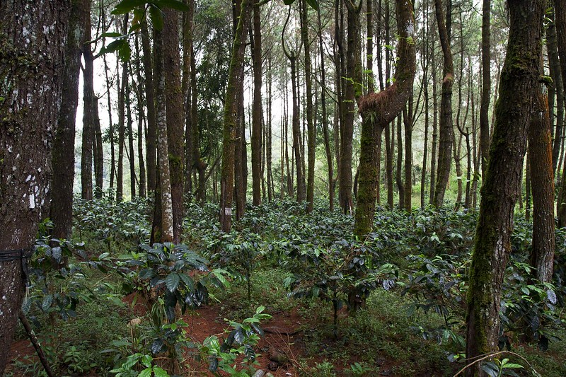 Coffeelands
