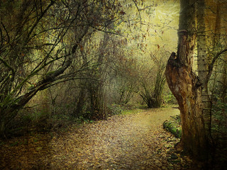 The Enchanted Forest series | by Nick Kenrick.