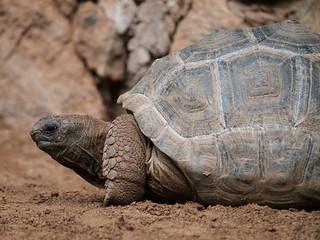 Tortoise | by wwarby