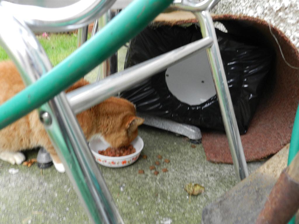 Ginga and a feral cat box   18112012 - these styrofoam (fish