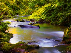 turtons-creek2
