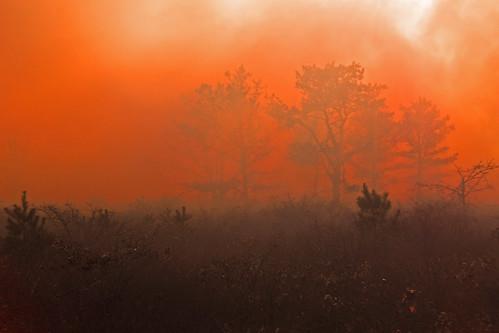 fire burn restoration controlledburn longpoint prescribedfire ttor