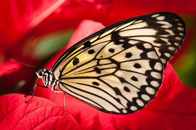 Butterfly Palace 7852