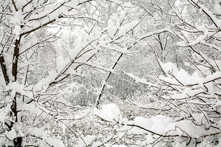 Winter Wonderland | by epiøne